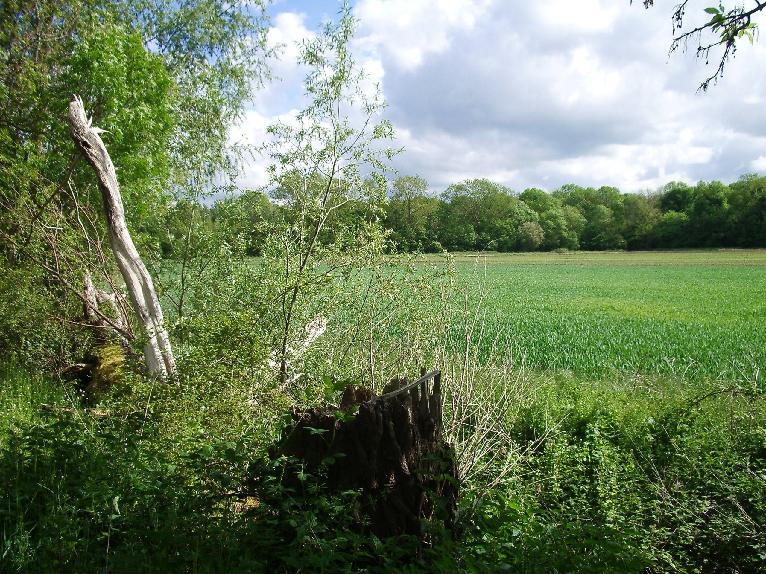 linear-woodland-was-planted-to-protect-new-pasture-such-as-here-on-crudgington-moor