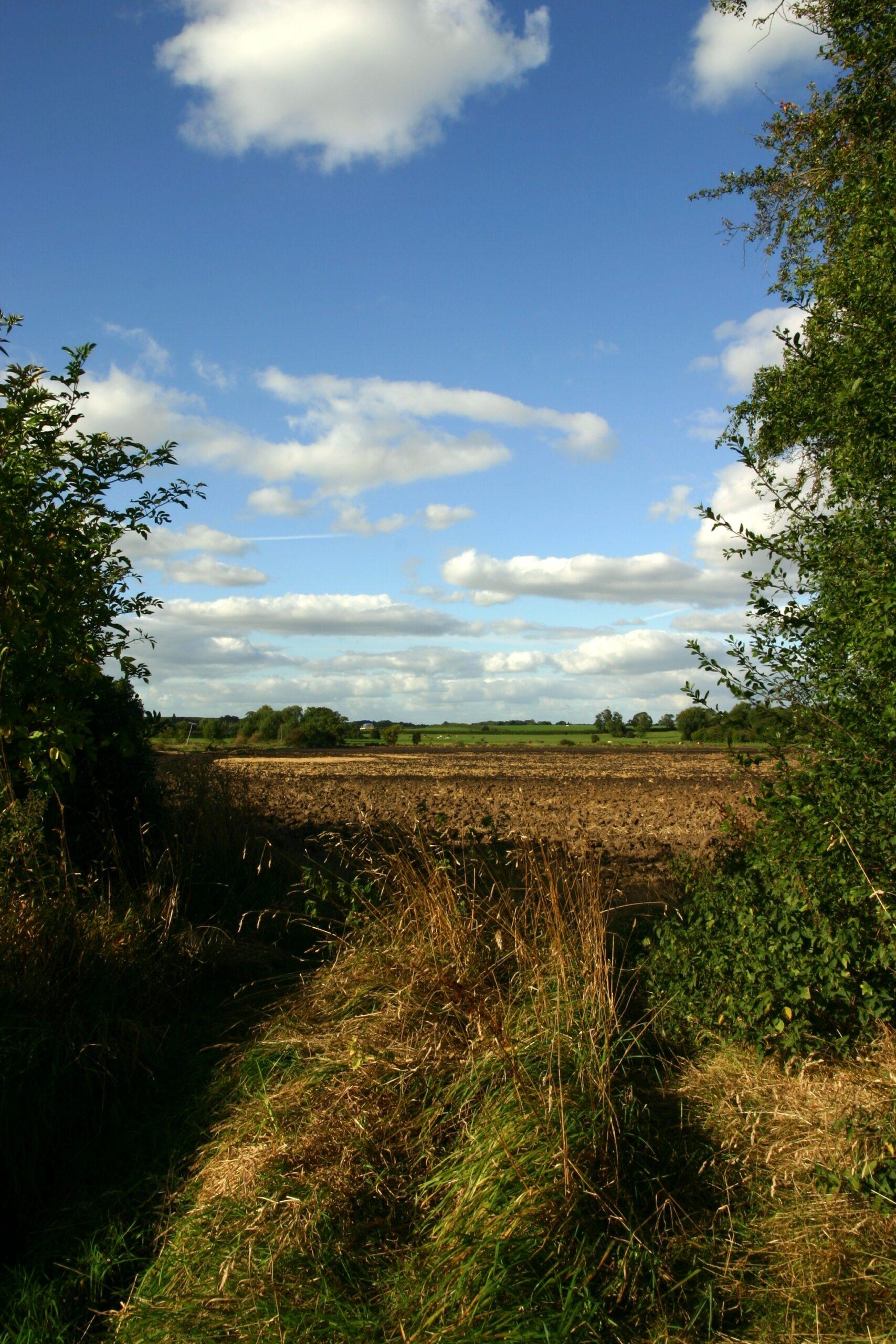 Looking-across-Rodway-Moor