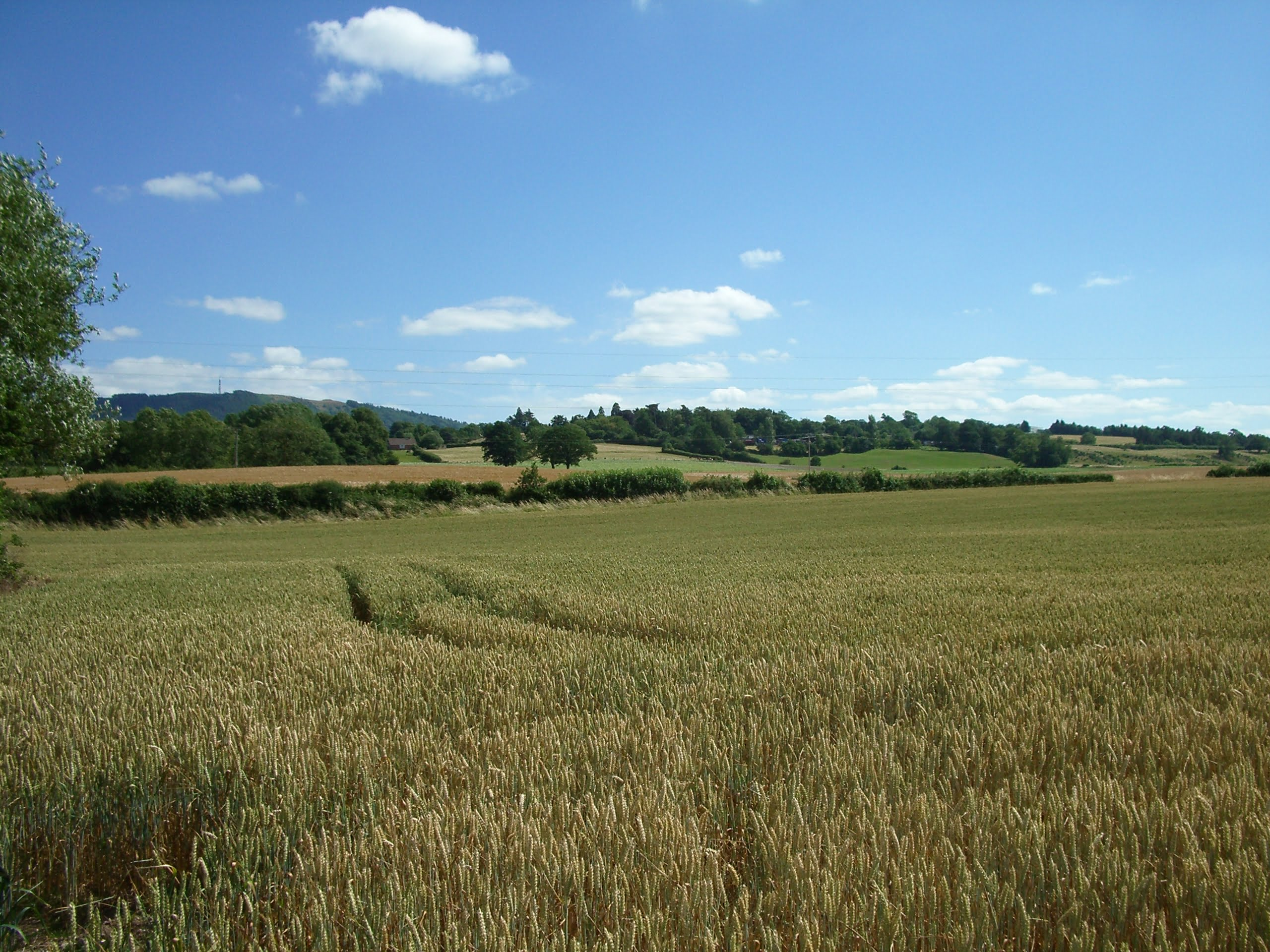 overley-hill-and-the-wrekin