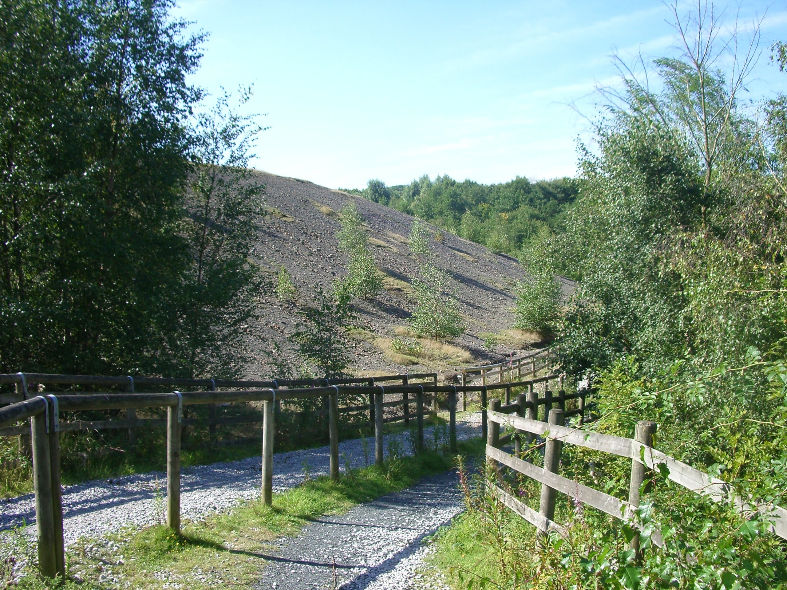 scrub-is-gradually #-colonising-the-spoil heaps-of-the-former-granville-colliery